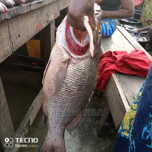 Fresh Fish Available   Fish for sale in Lagos State, Ikeja