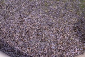 Catfish Fingerlings And Juveniles For Sale | Livestock & Poultry for sale in Abuja (FCT) State, Masaka