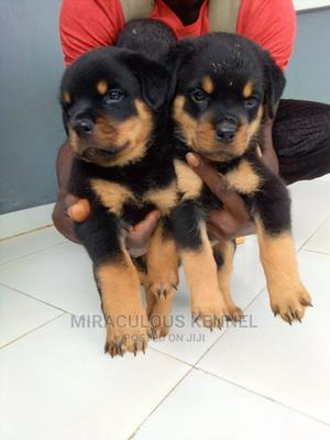 1-3 Month Female Purebred Rottweiler | Dogs & Puppies for sale in Delta State, Ika South