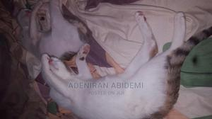 3-6 Month Female Mixed Breed Cat | Cats & Kittens for sale in Kwara State, Ilorin South