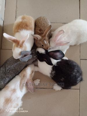 Fast Growing, Disease Resistant Exotic Rabbits | Other Animals for sale in Ogun State, Ifo