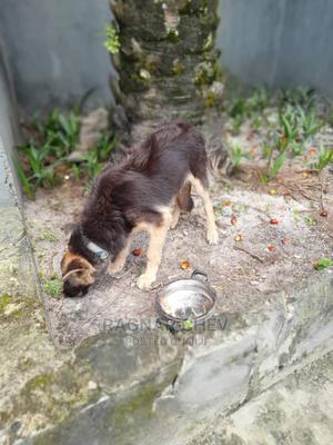 Pet Handler | Farming & Veterinary CVs for sale in Lagos State, Alimosho