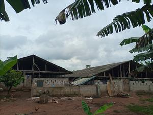Two Male Pig Farm Workers Needed at Ilaro Road, Near Ifo | Farming & Veterinary Jobs for sale in Ogun State, Ifo