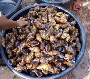 Fresh And Big Snails   Other Animals for sale in Lagos State, Ikeja