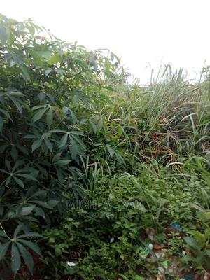 100ft by 100ft for Sale at Ayen Community   Land & Plots For Sale for sale in Edo State, Benin City