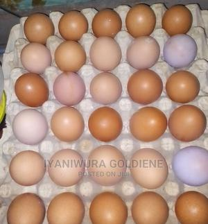 Farm Fresh Eggs   Livestock & Poultry for sale in Lagos State, Abule Egba