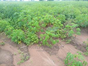 4000 Acres of Registered Survey Land for Sale   Land & Plots For Sale for sale in Oyo State, Iseyin