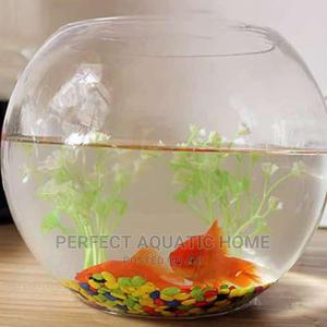 Fish Bowl Kit 6liters   Pet's Accessories for sale in Lagos State, Surulere