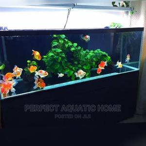 Aquarium With Lovely Fishes | Pet's Accessories for sale in Lagos State, Surulere