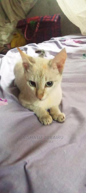 3-6 Month Female Purebred Mongrel (No Breed)   Cats & Kittens for sale in Abuja (FCT) State, Mararaba