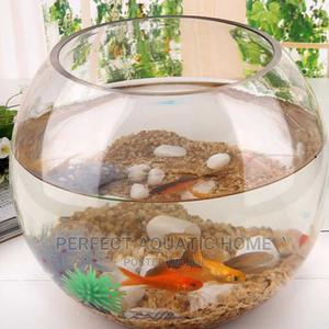 Fish Bowl Kit Happy Family   Fish for sale in Lagos State, Surulere