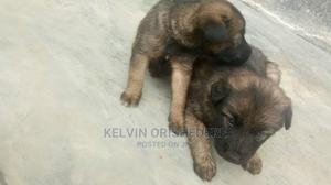 3-6 Month Male Mixed Breed German Shepherd | Dogs & Puppies for sale in Delta State, Ugheli