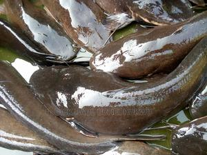 Point and Kill Catfish | Meals & Drinks for sale in Abia State, Aba North