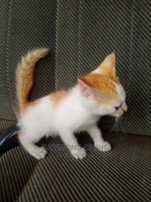 1-3 Month Female Mixed Breed Cat | Cats & Kittens for sale in Lagos State, Ajah
