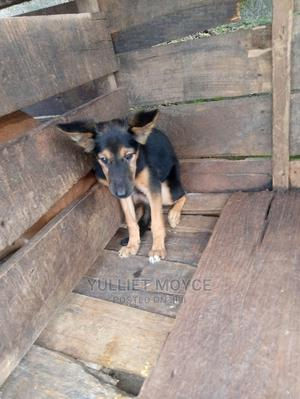 1-3 Month Female Mixed Breed German Shepherd | Dogs & Puppies for sale in Oyo State, Ibadan
