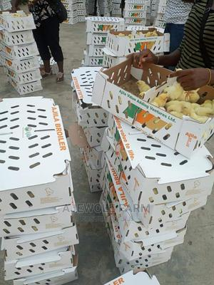 Day Old Turkey Both Imported and Local. Day Old Chicks   Livestock & Poultry for sale in Oyo State, Ibadan