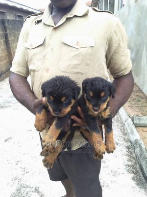 1-3 Month Female Purebred Rottweiler | Dogs & Puppies for sale in Ogun State, Abeokuta South