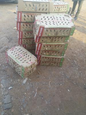 Day Old Broilers for Sale From Hatcheries   Livestock & Poultry for sale in Imo State, Orlu