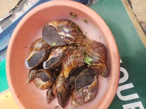 Mr Bolaji Sogunro | Livestock & Poultry for sale in Lagos State, Ikorodu