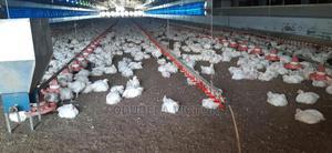 Broiler Chickens | Livestock & Poultry for sale in Ogun State, Ado-Odo/Ota
