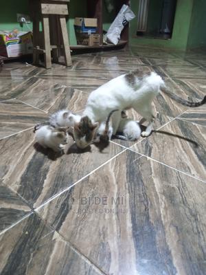 1-3 Month Female Purebred Mongrel (No Breed)   Cats & Kittens for sale in Ogun State, Ado-Odo/Ota