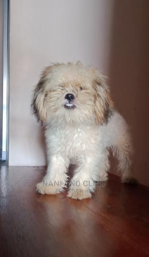 1-3 Month Female Purebred Lhasa Apso | Dogs & Puppies for sale in Enugu State, Enugu