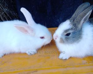 Rabbit  for Sale   Other Animals for sale in Lagos State, Gbagada