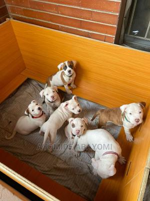 1-3 month Female Purebred Bulldog | Dogs & Puppies for sale in Lagos State, Alimosho