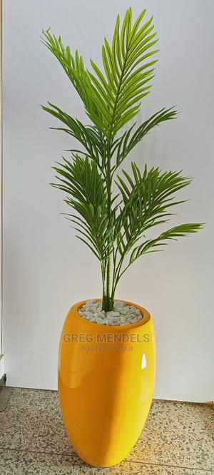 High Quality Palm Plant for Outdoor Decor | Garden for sale in Lagos State, Ikeja