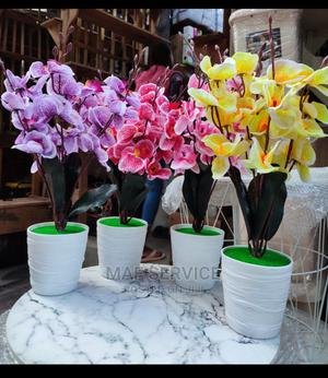 Orchid Flower Pot | Garden for sale in Lagos State, Alimosho