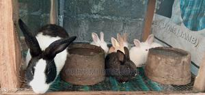 Rabbit Weaners for Sale   Other Animals for sale in Ogun State, Ado-Odo/Ota