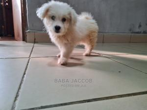1-3 Month Male Purebred Lhasa Apso | Dogs & Puppies for sale in Abuja (FCT) State, Dutse-Alhaji