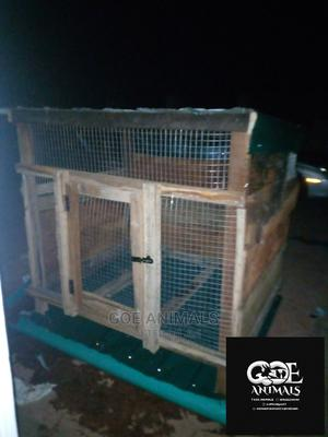 GOE Animals- For Constructions Like Hutches,Poultry Cage,Etc   Farm Machinery & Equipment for sale in Ondo State, Akure