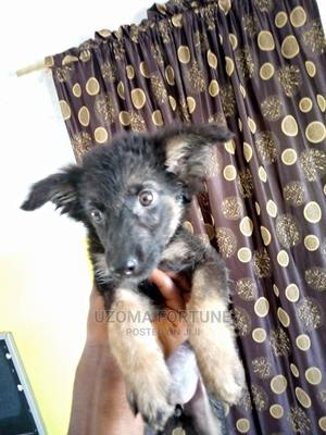 1-3 Month Female Purebred German Shepherd | Dogs & Puppies for sale in Lagos State, Lekki