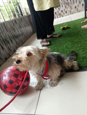 Home Dog Training | Pet Services for sale in Rivers State, Port-Harcourt