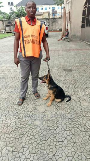 Dog Teacher | Pet Services for sale in Rivers State, Port-Harcourt