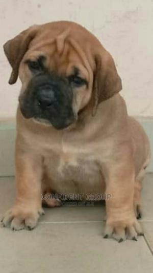 Dog Tutorials | Pet Services for sale in Rivers State, Port-Harcourt