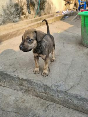 Fast Learning Dog | Pet Services for sale in Rivers State, Port-Harcourt