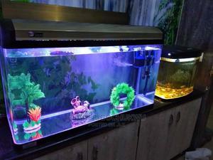 Fish Aquarium | Fish for sale in Lagos State, Orile