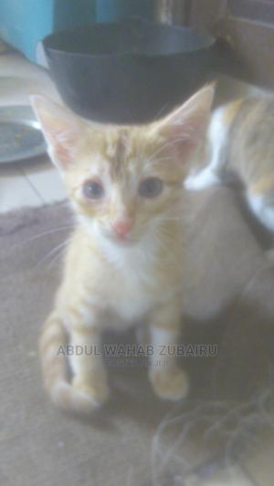 1-3 Month Male Purebred Mongrel (No Breed) | Cats & Kittens for sale in Abuja (FCT) State, Mararaba