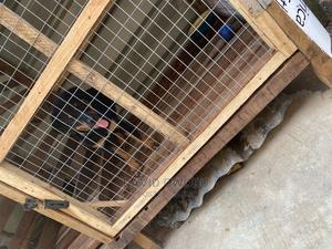 Boarding Services for Pets | Pet Services for sale in Lagos State, Alimosho