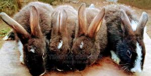 Dutch Rabbit Weaners   Other Animals for sale in Oyo State, Ibadan