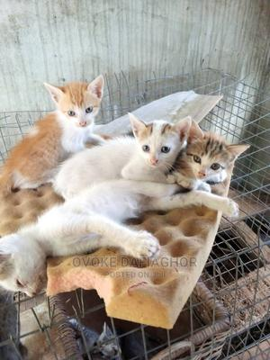 1-3 Month Female Mixed Breed Mongrel (No Breed)   Cats & Kittens for sale in Lagos State, Ikorodu