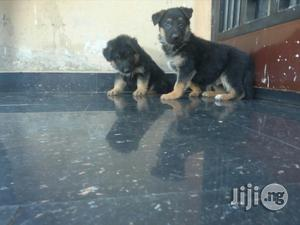 Baby Male Purebred German Shepherd Dog | Dogs & Puppies for sale in Lagos State, Apapa