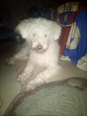 1+ Year Female Mixed Breed Tibetan Terrier | Dogs & Puppies for sale in Rivers State, Port-Harcourt