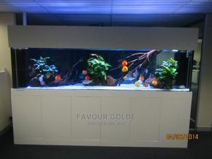 Wooden Fish Aquarium | Fish for sale in Lagos State, Surulere