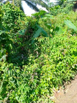 Land for Sale at Ifa,Ikot Akpabio,Uyo | Land & Plots For Sale for sale in Akwa Ibom State, Uyo