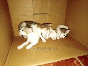 1-3 Month Male Purebred Mongrel (No Breed) | Cats & Kittens for sale in Ogun State, Ado-Odo/Ota