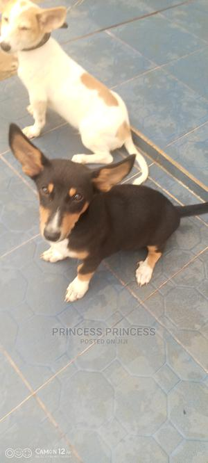 1-3 Month Male Mixed Breed Dog | Dogs & Puppies for sale in Ogun State, Ado-Odo/Ota