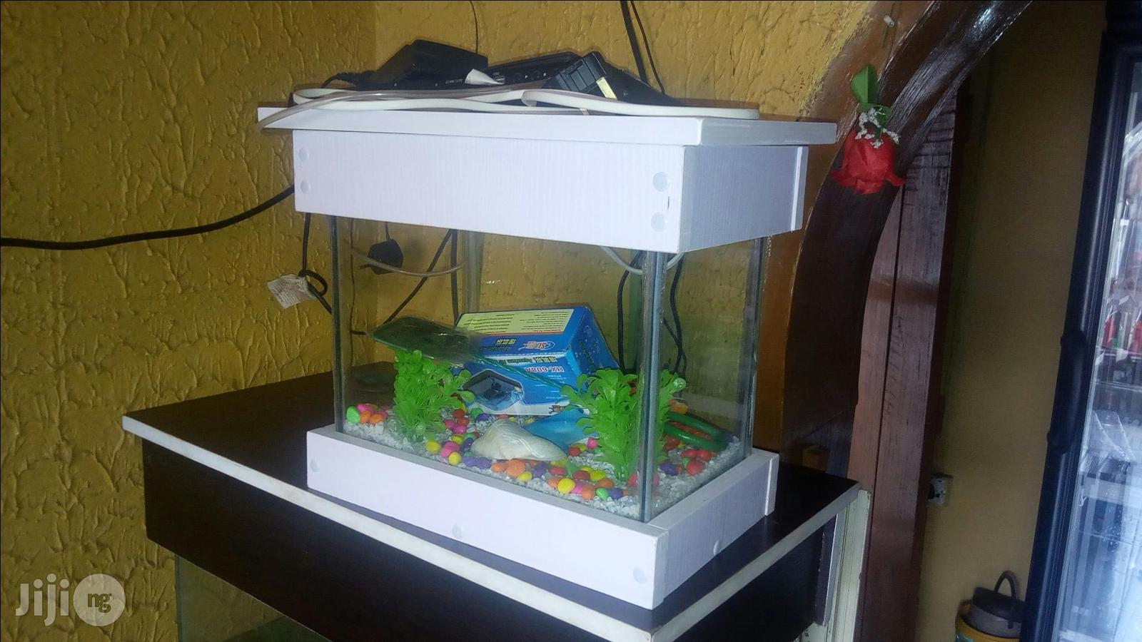 Archive: Mini Aquariums For Home And Office